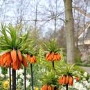 Pays-Bas - Keukenhof