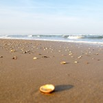 Egmond aan Zee – Les coquillages