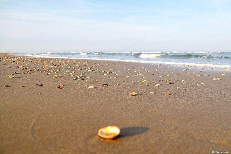 Egmond aan Zee - Les coquillages