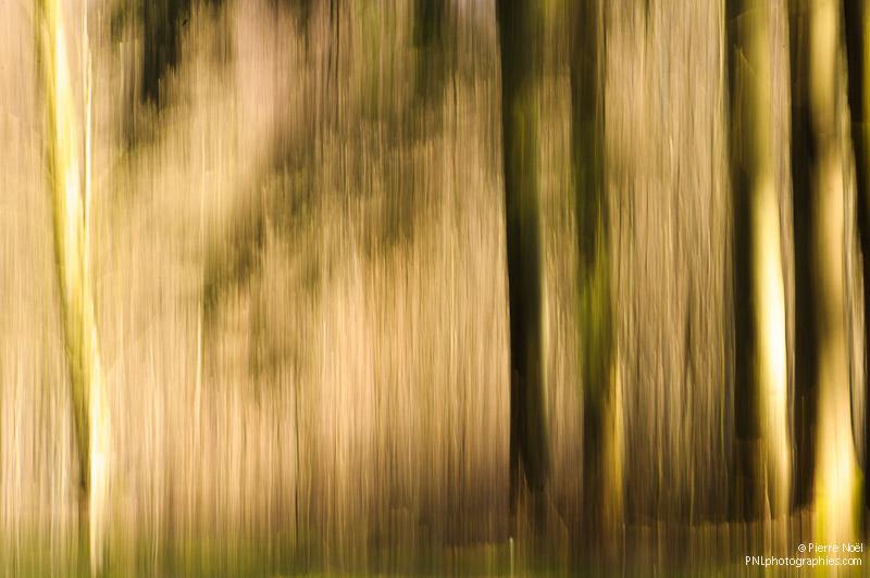 Belgique - Forêt de Buzenol